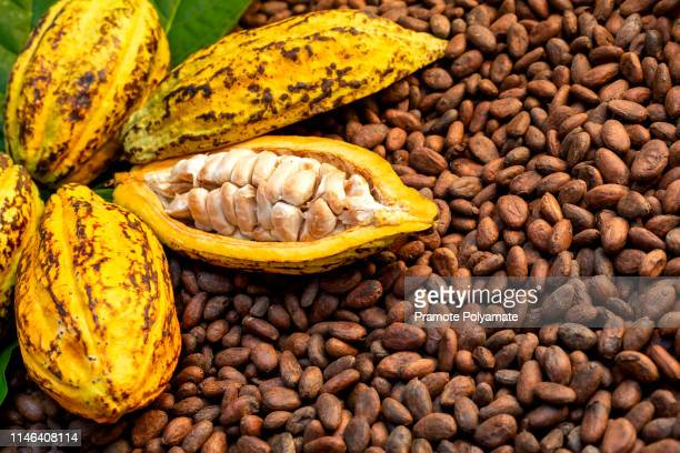 aromatic cocoa beans as background, cocoa beans and cocoa fruits on wooden. - plant pod stock pictures, royalty-free photos & images