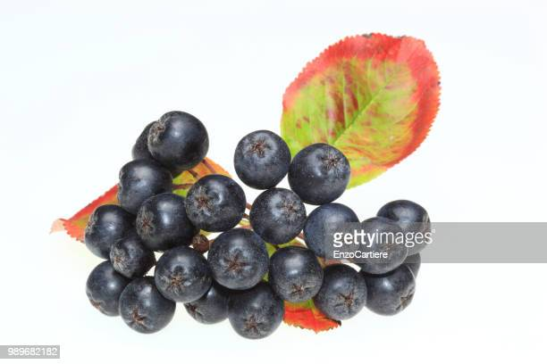 aronia berries, aronia, Aronia melanocarpa