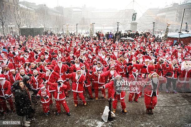 Around 1500 people in Santa Claus costumes warm up in the Kungstradgarden Park prior to the 3 kilometer long Santa Run in Stockholm Sweden December...