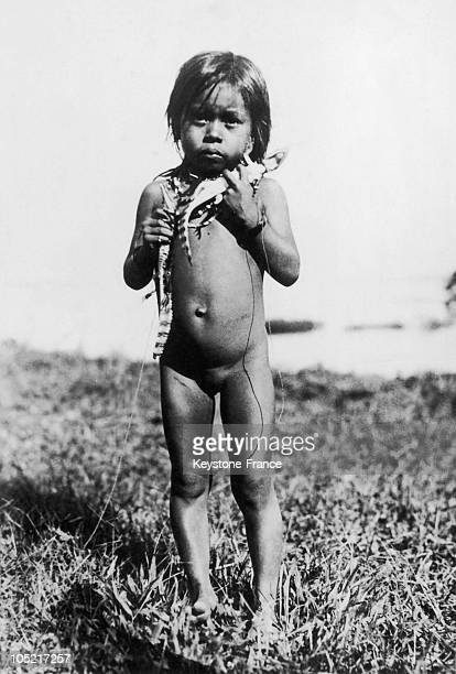 Around 1947 Near Manaus In Amazonia In Brazil A Small Indian Girl Naked Holding Some Baby Alligators