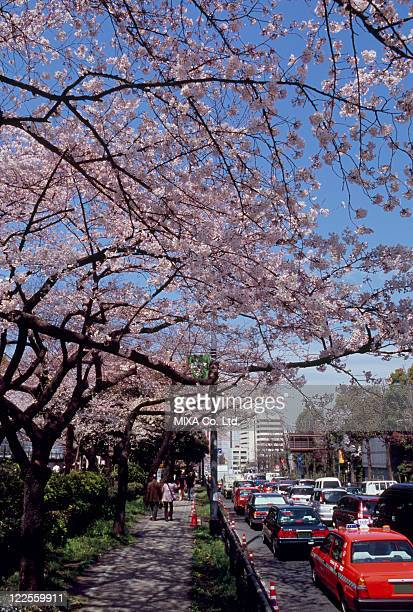 around british embassy, chiyoda, tokyo, japan - 英国大使館 ストックフォトと画像
