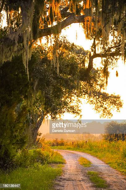 around the bend - spanish moss stock pictures, royalty-free photos & images