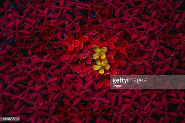 花の背景に赤のお手配