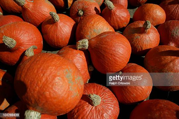 Arranged pumpkins are pictured during the World's largest pumpkin exibition at Ludwigsburg Castle on September 19 2010 in Ludwigsburg Germany During...