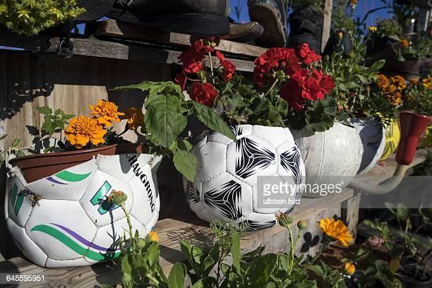 """Arrangement at the community garden """"Allmende-Kontor"""" on Tempelhofer Feld."""
