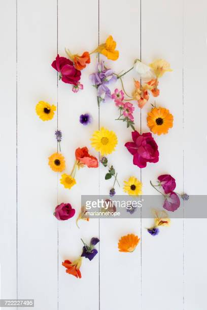 Arrangement of colorful Flowers
