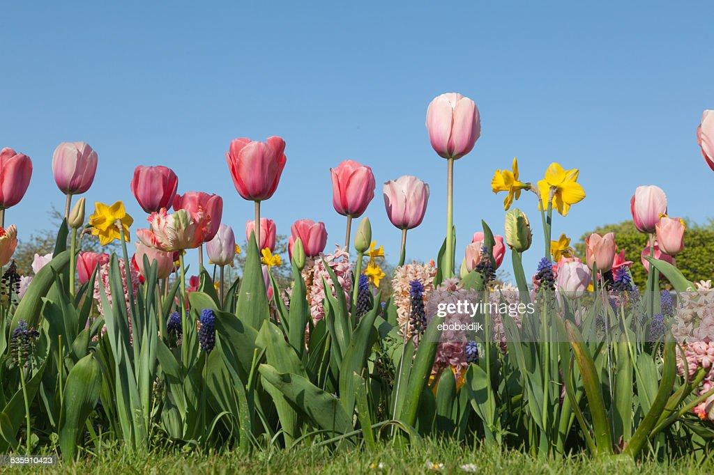Zusammenstellung verschiedener Blumen : Stock-Foto