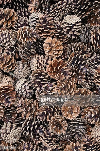 Arrangement of dried, fallen pine cones