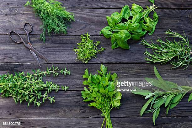 Arrangement of fresh herbs on table with scissors