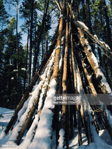Arrangement of frozen tree branches