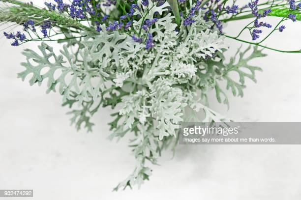 Arrangement of sage flowers and cineraria leaves. Extreme close up.