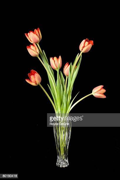 Arrangement of tulips in a crystal vase shot on black background.