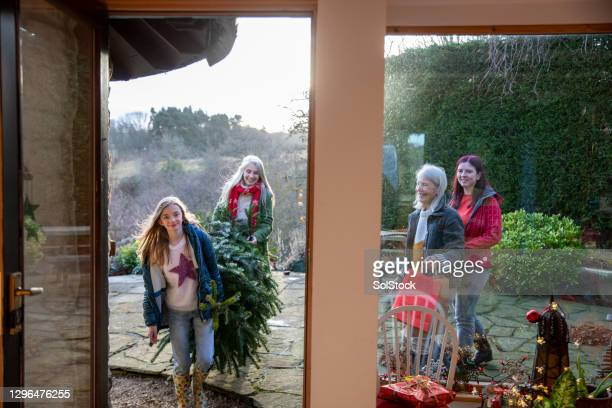 arriving home with the christmas tree - 12 17 months stock pictures, royalty-free photos & images