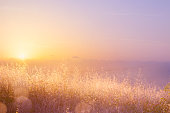 Art abstract  natural background; summer sunny meadow