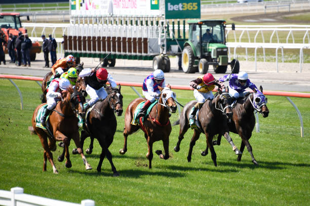 AUS: Geelong Racing Club Race Meeting
