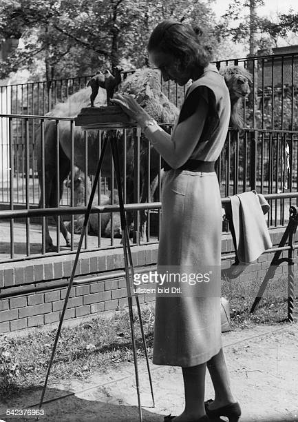 Art student modelizing a dromedary of clay in the Berliner ZOO - um 1940 - Photographer: Seidenstuecker - Published by: 'Berliner Illustrirte...