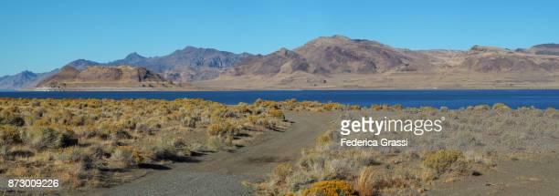 artemisia flowers (sagebrush) along the shores of pyramid lake, nevada - sagebrush stock pictures, royalty-free photos & images