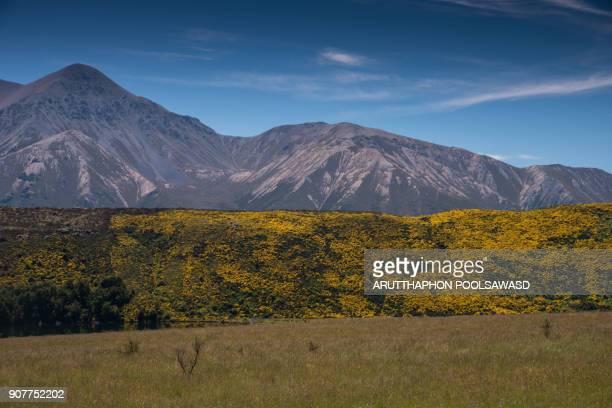 Arthur' pass National park , canterbury , new zealand