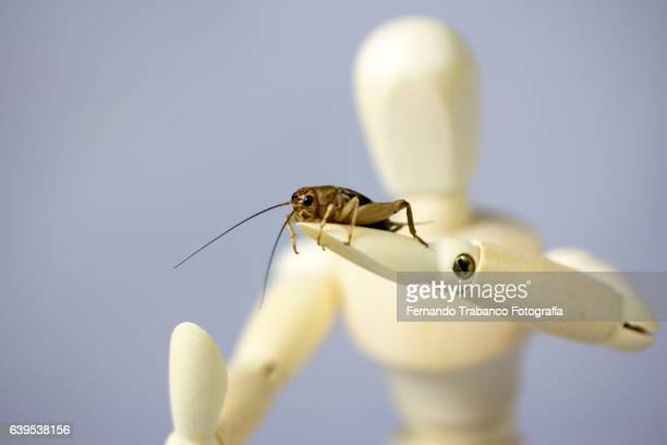 Articulated doll with human form holding an insect (a cricket)