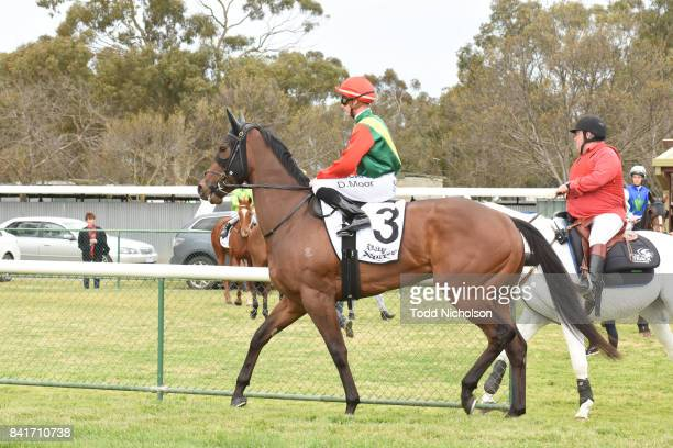 P'artie Town ridden by Daniel Moor goes out for the Ladbrokes Up For The Challenge Maiden Plate at Warracknabeal Racecourse on September 02 2017 in...