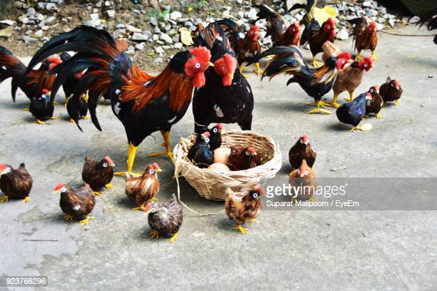 Artificial Chickens On Ground