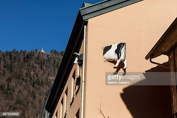 artificial cow stuck in building wall - merten snijders stock pictures, royalty-free photos & images