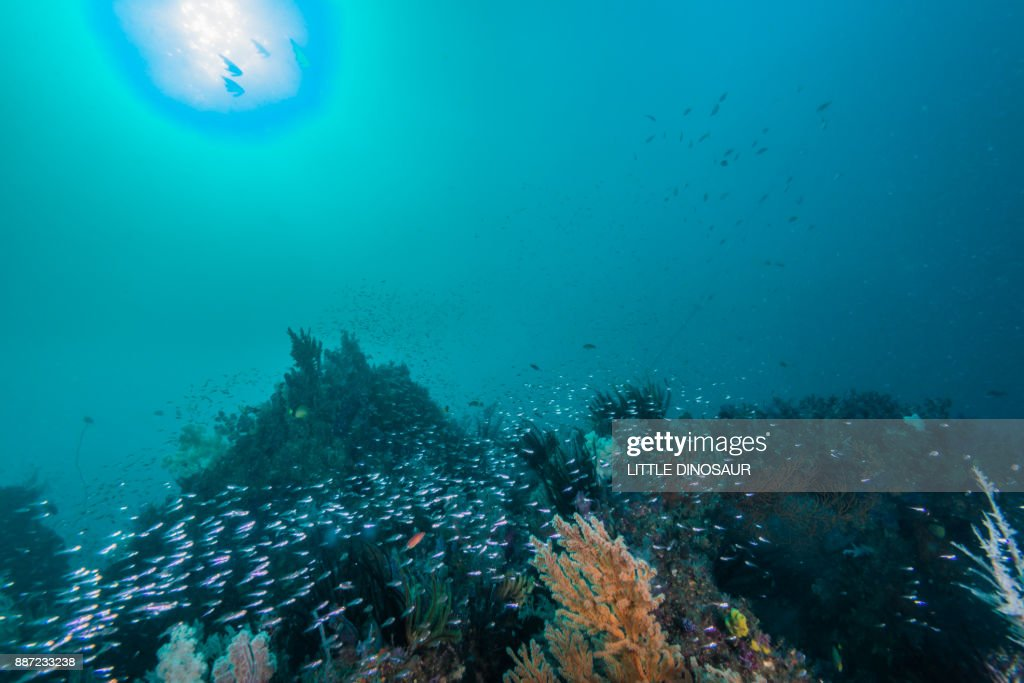 artificial fish reef under the sun : Stock Photo