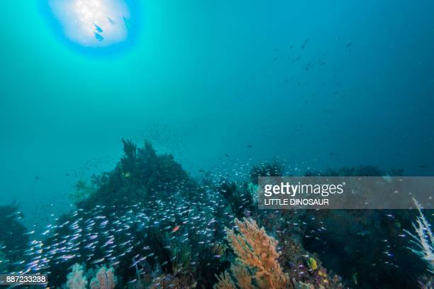 artificial fish reef under the sun