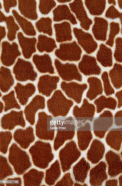 artificial giraffe fur - white giraffe stockfoto's en -beelden
