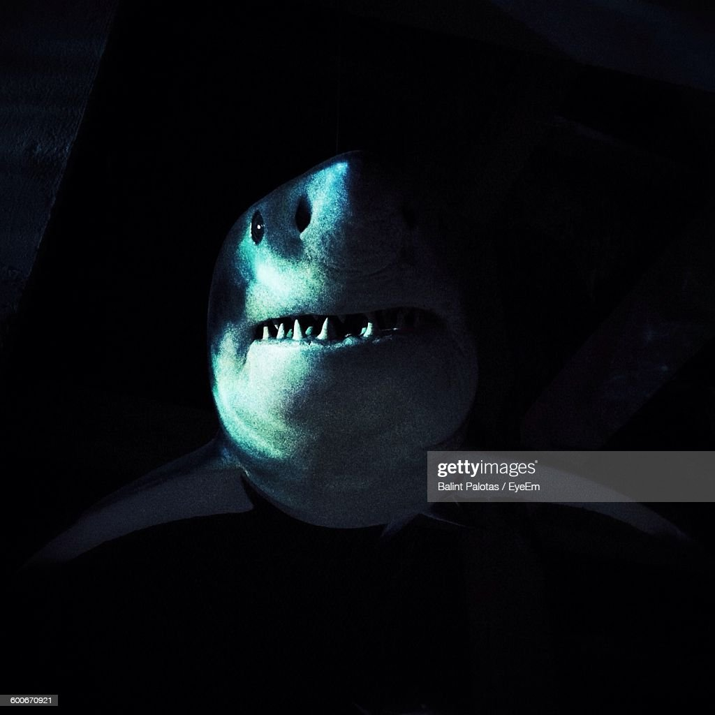 Artificial Great White Shark Hanging From Ceiling : Stock Photo