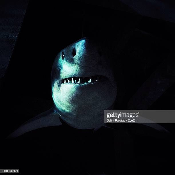 artificial great white shark hanging from ceiling - great white shark stock photos and pictures
