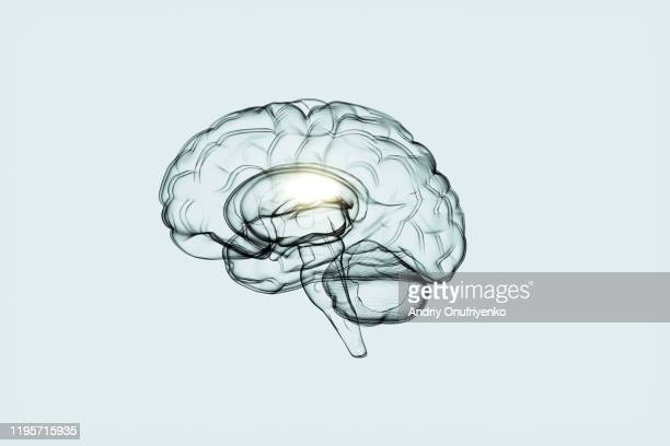 artificial intelligence brain - human brain stock pictures, royalty-free photos & images