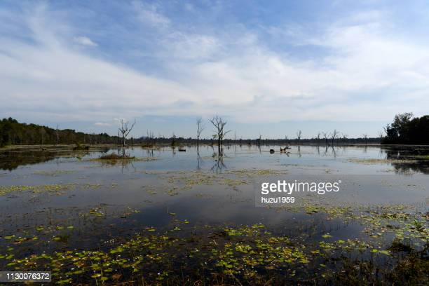 artificial lake of preah khan (preah khan baray) - 湖 stock pictures, royalty-free photos & images