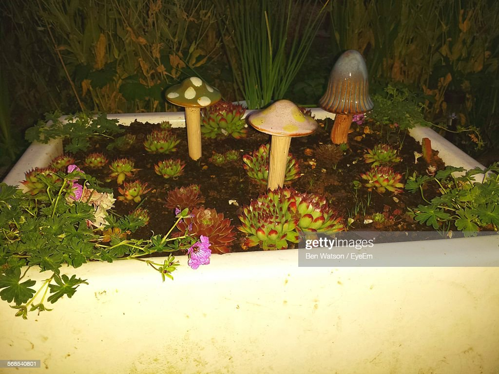 Artificial Mushrooms And Plants In Garden : Stock Photo