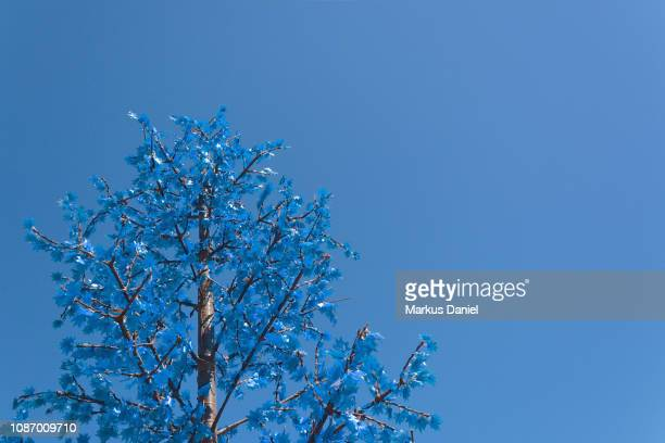 Artificial Outdoors Blue Christmas Tree