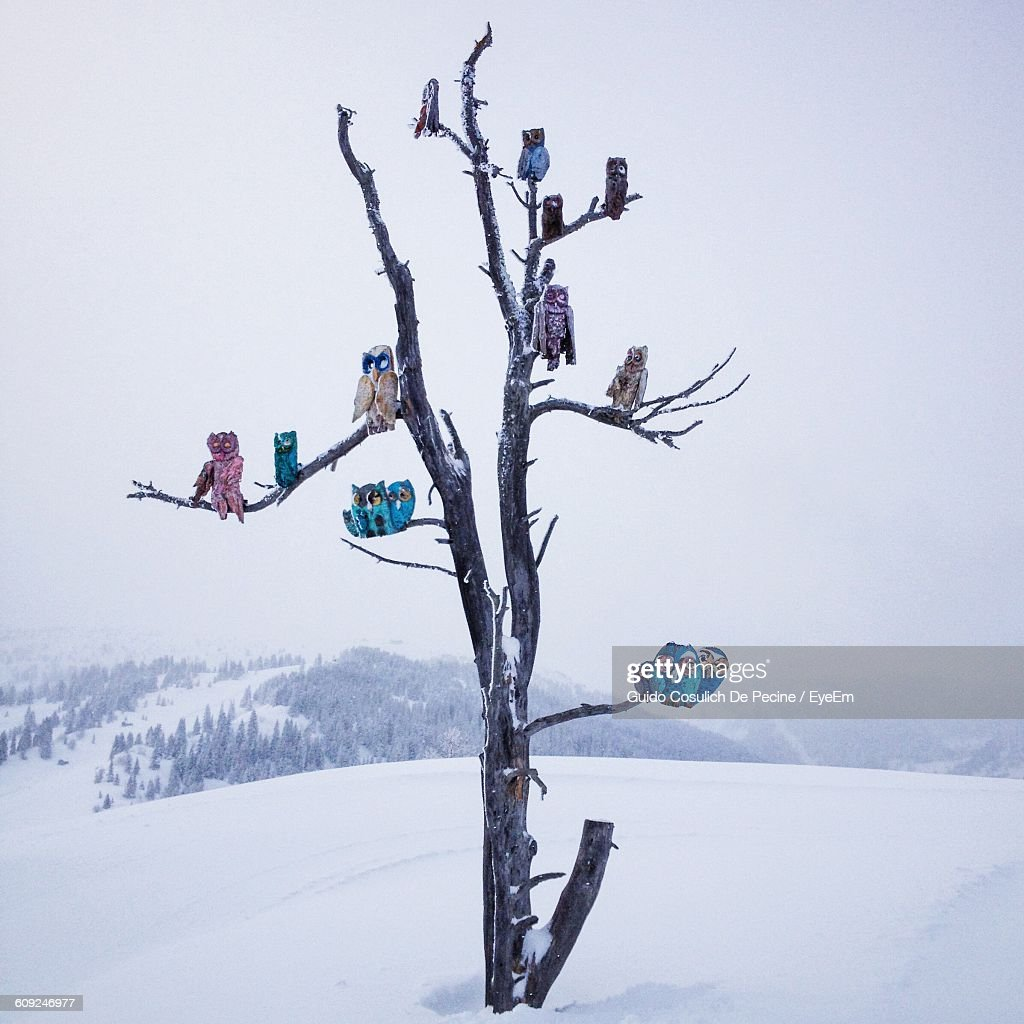 Artificial Owls On Bare Tree At Snow Covered Landscape Against Sky Stock Photo