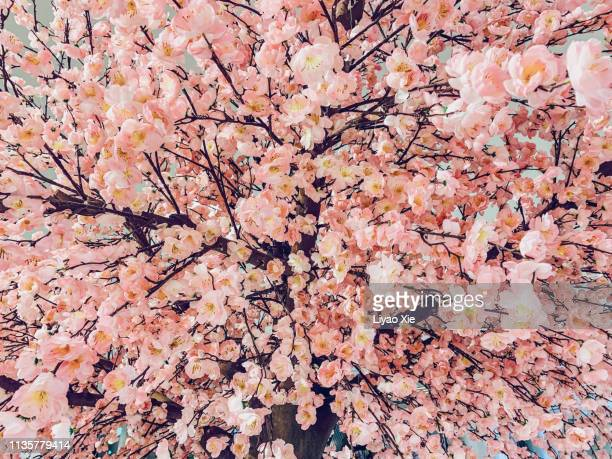 artificial peach blossom - peach blossom stock pictures, royalty-free photos & images