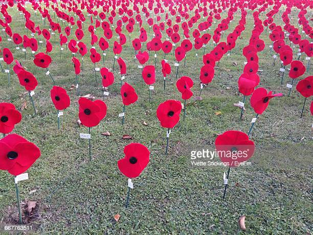 artificial red poppies on field during anzac day - anzac day stock pictures, royalty-free photos & images
