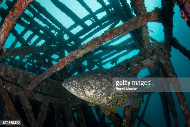 artificial reef - ilha de mabul imagens e fotografias de stock