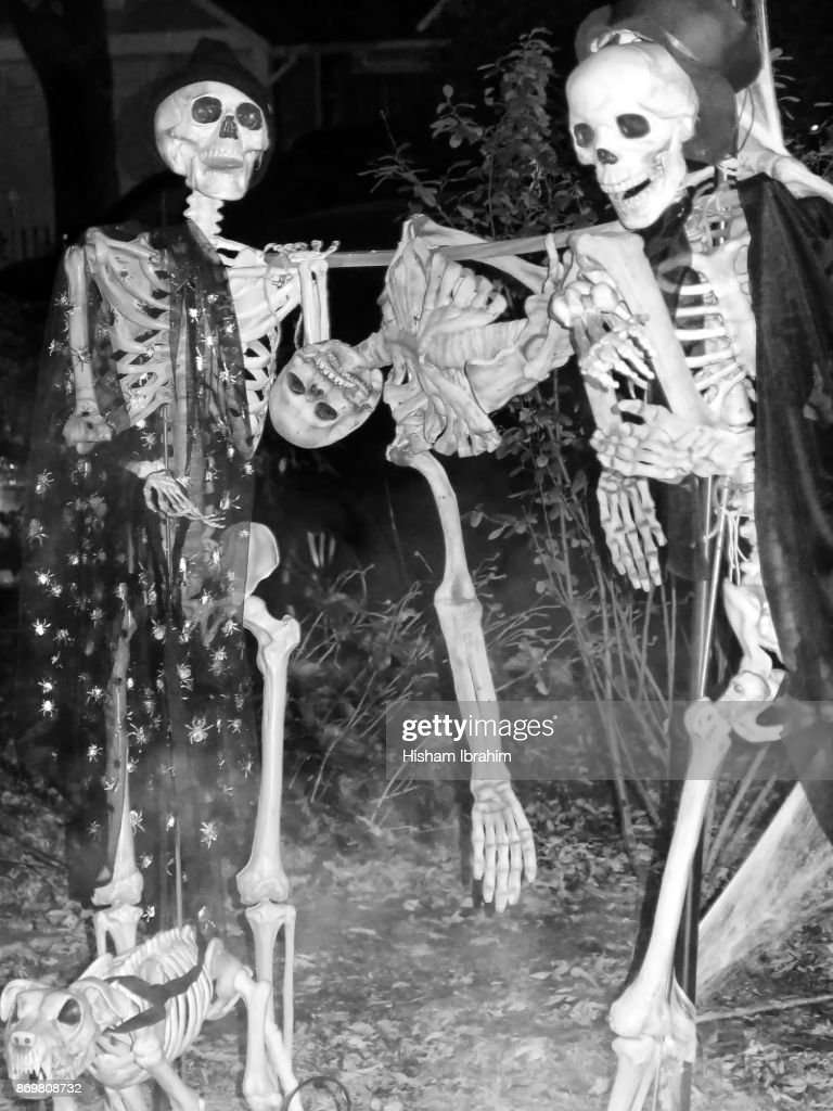 artificial scary human and dog skeletons in a house backyard used