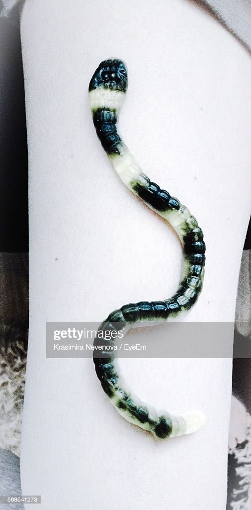 Artificial Snake On Leg : Stock Photo