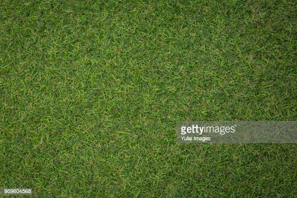 artificial turf background - grass stock pictures, royalty-free photos & images