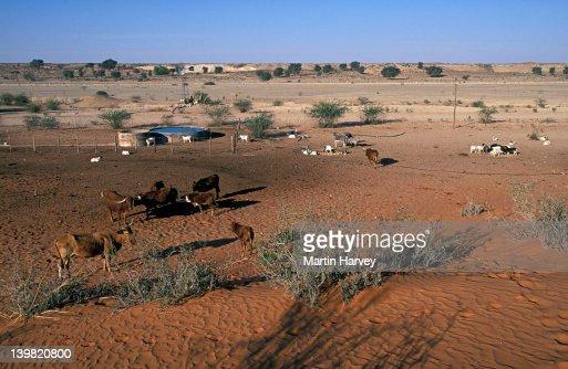 Artificial Waterholes Livestock Farming Causes Overgrazing ...