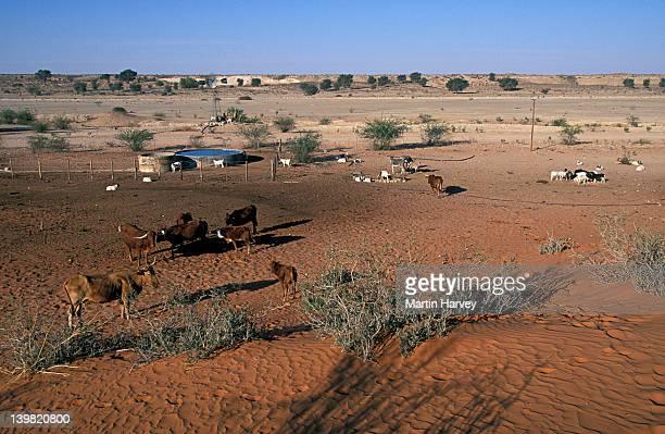 Artificial waterholes. Livestock farming causes overgrazing and desertification, Kalahari Desert, Africa