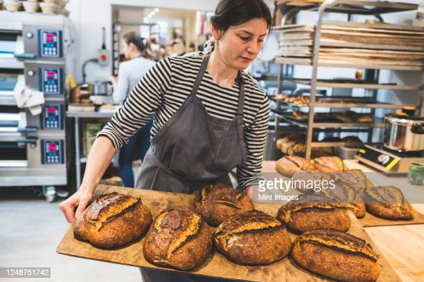artisan baker holding a tray of special sourdough bread. - bakery stock pictures, royalty-free photos & images