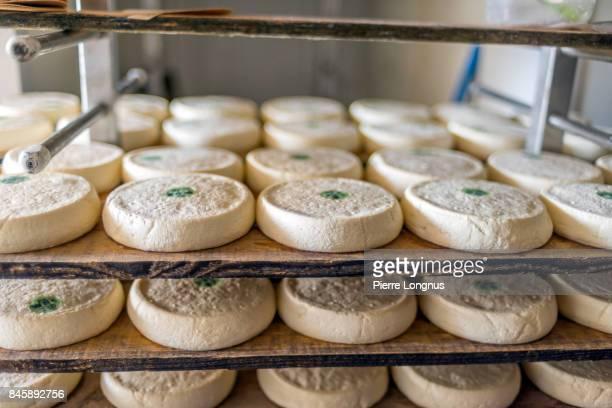 artisanal hand made raw milk reblochon cheese made in the village of le grand-bornand, haute savoie, france - ルグランボルナン ストックフォトと画像