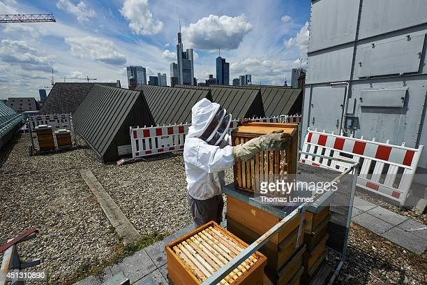 Artist and beekeeper Andreas Wolf controls his beehives on the roof of the Museum of Modern Art on June 26 2014 in Frankfurt am Main Germany The art...