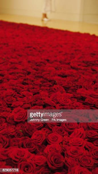 Artist Anya Gallacio's 'Red on Green' consisting of 10000 english tea roses in which the heads are laid on a bed of thorns at the Tate Britain's 'Art...