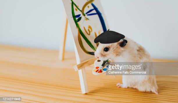 artist hamster - multi colored hat stock pictures, royalty-free photos & images