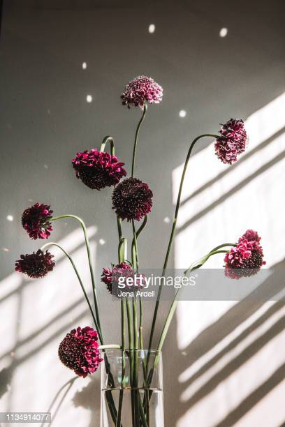 208 Tall Vase Photos And Premium High Res Pictures Getty Images